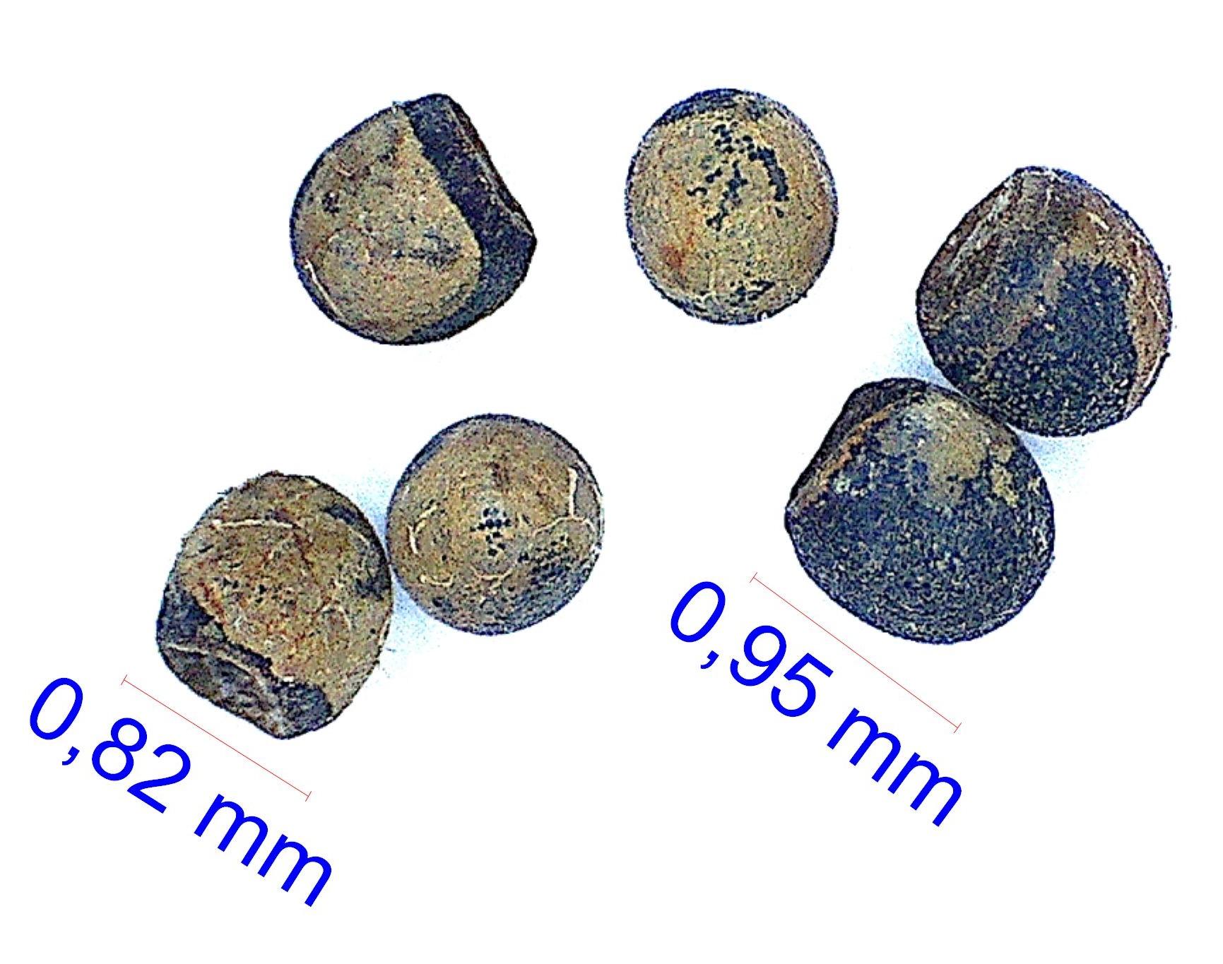 Gymnocalycium campestre KP 330