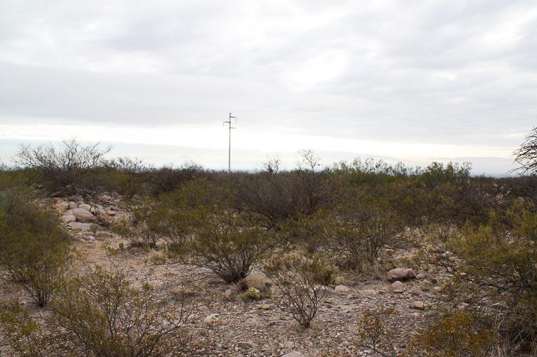 Biotope de Gymnocalycium bodenbenderianum RFPA 268, © Flavien Heriot. 5 km Sud-ouest Nonogasta, La Rioja, Argentine, 1060 m.