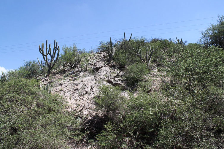 Biotope de Gymnocalycium castellanosii ssp ferocius RFPA 312, © Flavien Heriot. 8 km sud-ouest de Tuclame, Cordoba, Argentine, 420 m.