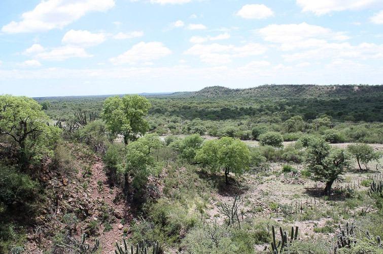 Biotope de Gymnocalycium castellanosii RFPA 310, © Flavien Heriot. 2 km Nord Olta, La Rioja, Argentine, 534 m.