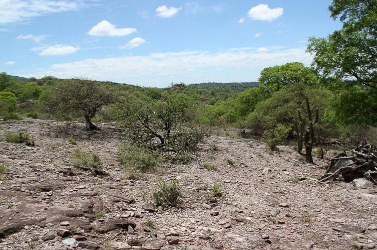 Biotope de Gymnocalycium castellanosii RFPA 311, © Flavien Heriot. Sud-ouest Olta, La Rioja, Argentine, 569 m