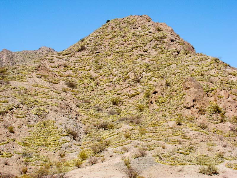Biotope de Gymnocalycium glaucum, © Luis Marcelo MICHAUD. Tinogasta dans l'ouest de Catamarca près de la Cordillère des Andes
