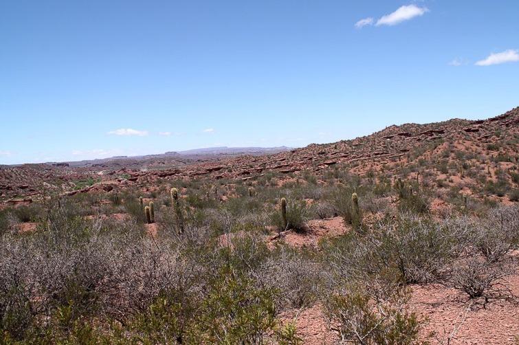 Biotope de Gymnocalycium guanchinense RFPA 274, © Flavien Heriot. 4 km sud de Los Tambillos, La Rioja, Argentine, 1580 m.