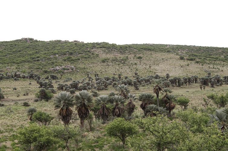Biotope de Gymnocalycium monvillei et de G. erinaceum RFPA 207, © Flavien Heriot. 9 km Nord Inti Huasi, Cordoba, Argentine, 910 m.