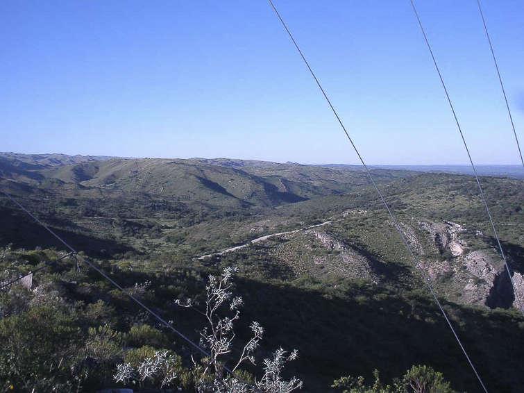 Gymnocalycium mostii © Luis Marcelo Michaud. Agua de Oro, versant ouest de la Sierra Chicas, Cordoba, Argentine. 5 janvier 2014