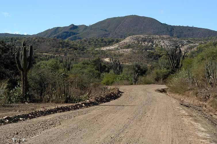 Paysage entre Comarapa et Mataral où poussent les G. pflanzii, © Didier Roult. Bolivie. Juin 2004