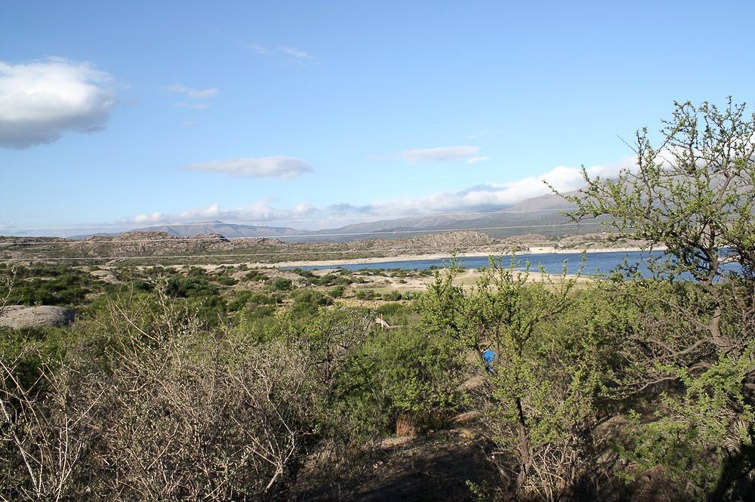 Biotope de Gymnocalycium quehlianum, G. valnicekianum et G. capillaense RFPA 203, © Flavien Heriot. Dique El Cajon, Capilla del Monte, Cordoba, Argentine, 974 m.