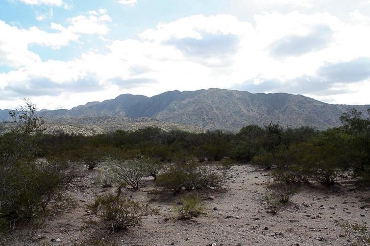 Biotope de Gymnocalycium riojense ssp kozelskyanum RFPA 298, G. schickendantzii, G. bodenbenderianum © Flavien Heriot. Los Baldecitos -R 150 -, La Rioja, Argentine, 1270 m