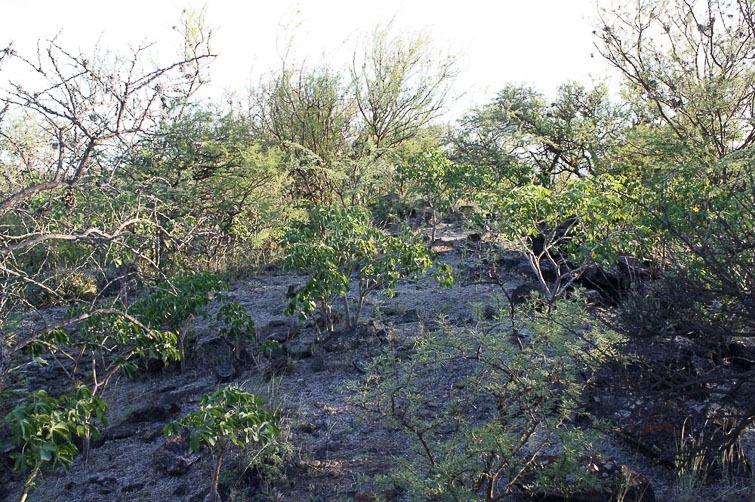 Biotope de Gymnocalycium riojense ssp paucispinum RFPA 213, © Flavien Heriot. Recreo, Catamarca, Argentine, 240 m.