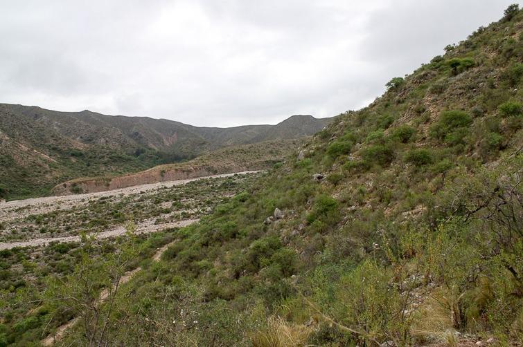 Biotope de Gymnocalycium ritterianum et de G. rhodantherum RFPA 265, © Flavien Heriot. 17 km Nord-ouest de Chilecito, La Rioja, Argentine, 1925 m.